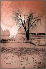 A Tree in a Field (Dave Linscheid) Tags: texture textured rural country farm agriculture snow winter smartphotoeditor butterfield watonwancounty minnesota