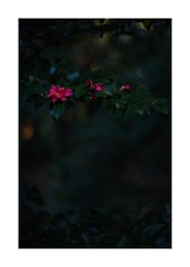 This work is 8/21 works taken on 2019/12/8 (shin ikegami) Tags: sony ilce7m2 a7ii sonycamera 50mm lomography lomoartlens newjupiter3 tokyo 単焦点 iso800 ndfilter light shadow 自然 nature naturephotography 玉ボケ bokeh depthoffield art artphotography japan earth asia portrait portraitphotography