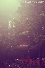 Nikkō - Shrines and Temples of Nikkō (CATDvd) Tags: nikond7500 日本国 日本 stateofjapan nippon niponkoku nihonkoku nihon japón japó japan estatdeljapó estadodeljapón catdvd davidcomas httpwwwdavidcomasnet httpwwwflickrcomphotoscatdvd july2019 architecture arquitectura building edifici edificio temple templo kantōregion kantōchihō santuariosytemplosdenikkō santuarisitemplesdenikkō shrinesandtemplesofnikkō nikkō nikkōshi 日光市 prefecturadetochigi tochigiprefecture tochigiken 栃木県 regiódekantō regióndekantō 関東地方 travelplanet twop nikonflickraward aasia flickrtravelaward