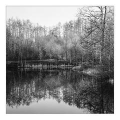 Silence, forest pond near Kell am See (werner-marx) Tags: analog film meinfilmlab mediumformat superikonta superikontab superikonta53216 zeissopton tessar zeissoptontessar kodaktrix400 kellamsee forest pond forestpond reflection