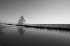 Solo (kjell.reinsch) Tags: bw blackandwhite schwarzweiss sw hamme fluss baum tree river mood moor monochrome germany worpswede niedersachsen landscape landschaft minimalismus