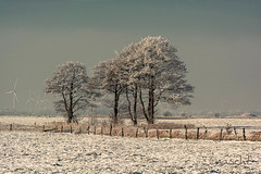 Winter in the willows (Onascht) Tags: photoart winter nature dangast d5200 amateurphotography snow trees niedersachsen outside landscapephotography cold nikonphotography fields landscape nikon digitalart art grey white