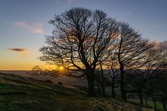 Sunrise (l4ts) Tags: landscape derbyshire peakdistrict darkpeak hopevalley thegreatridge goldenhour sunrise trees losehill losehillfarm cloudscape clouds