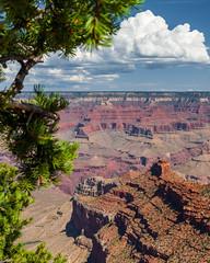 Grand Canyon National Park   |   Pipe Creek Vista (JB_1984) Tags: tree rim canyon geologicalformation cloud red rock nationalpark nps framing pipecreekvista southrim grandcanyonnationalpark grandcanyon arizona az usa unitedstates nikon d500 nikond500
