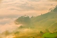 _Y2U4447-49.0919.Bản Dọi.Tân Lập.Mộc Châu.Sơn La. (hoanglongphoto) Tags: asia asian vietnam northvietnam northernvietnam nature landscape scenery vietnamlandscape vietnamscenery mocchaulandscape naturelandscape vietnamnature vietnammountainouslandscape morning sunshine sunny morningsunshine earlysunshine clouds mountain flanksmountain theforest forest terracedfields mist pog earlyfrost earlymorningpog pogofmocchau cloudsofmocchau canon canoneos1dsmarkiii canonef70200mmf28lisiiusm tâybắc sơnla mộcchâu tânlập bảndọi phongcảnh thiênnhiên núi buổisáng nắng nắngsớm mây sươngmù sươngsớm sườnnúi rừng ruộngbậcthang mâymộcchâu sươngmùmộcchâu phongcảnhthiênnhiên thiênnhiênmộcchâu hoanglongphoto hdr happyplanet asiafavorites