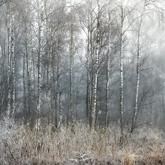 Frozen Winter (unciepaul) Tags: winter trees holme frosty woodland fine art huntingdonshire 100mm sony a7s lightroom november 2019 vintage lens
