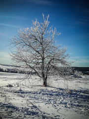 The ice tree (Peters HDR hobby pictures) Tags: petershdrstudio hdr tree ice snow landscape sky bluesky baum eis schnee landschaft himmel blauerhimmel