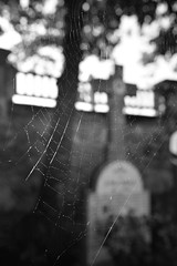 la araña (gabrielg761) Tags: cementerio araña tela mordedura vida muerte