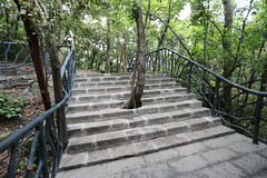 Trees are Important (Ozzy Delaney) Tags: tree steps china fence nature oriental preservation respect