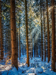 Sunbeams in a winterly forest - Sonnenrahlen im Winterwald (ralfkai41) Tags: schnee landscape landschaft sunbeams nature outdoor wald natur snow woodland trees forest bäume sonnenstrahlen sun winter sonne