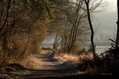 Spaziergang am Inn (Renata1109) Tags: inn spaziergang wasser strase weg baum natur sonne sonnenschein winter nebel