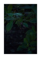 This work is 12/21 works taken on 2019/12/8 (shin ikegami) Tags: sony ilce7m2 a7ii sonycamera 50mm lomography lomoartlens newjupiter3 tokyo 単焦点 iso800 ndfilter light shadow 自然 nature naturephotography 玉ボケ bokeh depthoffield art artphotography japan earth asia portrait portraitphotography