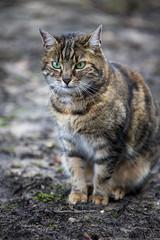 Katze - kitten (DeanB Photography) Tags: 1dx 2020 7dmarkii animals canon tiere tierwelt zoo zooduisburg animal kitten cat zookatze hauskatze