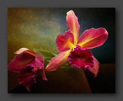 Orchid (ulli_p) Tags: asia art amazingcolours aworkofart blossoms colours flickraward flowers light nature texture textured texturedphoto