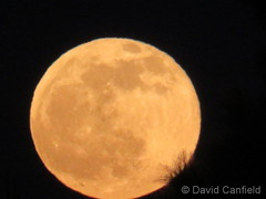 January 10, 2020 - The impressive rising wolf moon. (David Canfield)