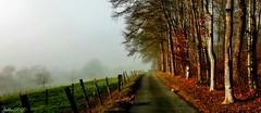 ~~ Brume et petits Lutins sur mon chemin ...~~ (Joélisa) Tags: janvier2020 chemin brume lily diego chat chien picmonkey