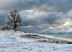 Standing Tall (reader630) Tags: ptbetsie lakemichigan winter weather duneecology scenicmichigan ngysa breathtakinglandscapes