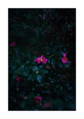 This work is 10/21 works taken on 2019/12/8 (shin ikegami) Tags: sony ilce7m2 a7ii sonycamera 50mm lomography lomoartlens newjupiter3 tokyo 単焦点 iso800 ndfilter light shadow 自然 nature naturephotography 玉ボケ bokeh depthoffield art artphotography japan earth asia portrait portraitphotography