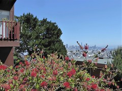 San Francisco, CA, Noe Valley, Overlook to Downtown (Mary Warren 14.7+ Million Views) Tags: sanfranciscoca nature flora plants green leaves foliage blooms blossoms flowers red urban cityscape skyline