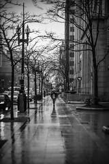 EA105284BW (sswee38823) Tags: blackwhite blackandwhite bw bnw leicablackandwhite rain rainyday rainy raining sidewalk umbrella silhouette people person cityscape city street tree trees boylstonstreet reflection reflections boston bostonma ma massachusetts newengland winter weather leica leicam leicacamera leicacamerausa leicacameraagleicam10 m10 m10leica leicam10 rangefinder leicanoctiluxm50mmf095asph noctiluxm50mmf095asph noctiluxm109550mmasph noctilux095 noctilux noc noctiluxm109550asph 50mm 50 leica50mmf95 095 f95 photography photograph photo seansweeney seansweeneyphotographer