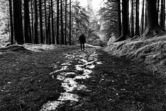 Crwydro (Rhisiart Hincks) Tags: coedwig coed wood woodland fforest forest forêt baso coille koad nantyrarian ceredigion blancinegre duagwyn gwennhadu dubhagusgeal dubhagusbán blackandwhite bw zuribeltz blancetnoir blackwhite monochrome unlliw blancoynegro zwartwit sortoghvid μαύροκαιάσπρο feketeésfehér juodairbalta bakarrik seul eihun eihunan alone eunan leisféin ue eu ewrop europe eòrpa europa aneoraip a'chuimrigh kembra wales cymru kembre gales galles anbhreatainbheag 威爾斯 威尔士 wallis uels kimrio valbretland 웨일즈