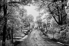 Mud and Snow (Robert_Brown [bracketed]) Tags: rob robertbrown thesilvercityphotographer gila nationalforest snow mud gravelroad trees badweather slippery wet infrared ir blackandwhite silvercity newmexico nm rural countryroad unsafe mountains