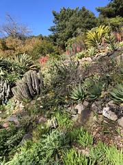 Southern Africa (Melinda * Young) Tags: ucbotanicalgarden southernafrica mild seasons arid berkeley ca mediterranean january climate
