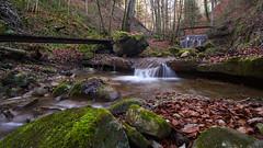 7R400072 (ivoräber) Tags: switzerland sony systemkamera swiss schweiz suisse loxia creek wald forest