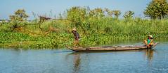 2019 - Vietnam-Avalon-Châu Đốc - 19 - Net Fishers - 3 of 5 (Ted's photos - Returns Early February) Tags: 2019 châuđốc cropped nikon nikond750 nikonfx tedmcgrath tedsphotos vietnam vignetting fishing netfishing fisherman sampan nettoss tossingthenet chaudocvietnam water waterhyacinth reflection waterreflection fishingnet