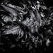 Ferns in monochrome