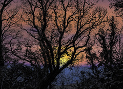 Sunrise (Shastajak) Tags: sunrise tree silhouette photoshopcc lightroomcc sunup dawn daybreak fairlightglen hastingscountrypark layers blending filters sea englishchannel