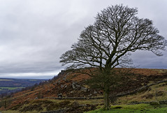Curbar edge. (S.K.1963) Tags: curbar edge baslow derbyshire peak district tree wall sky rocks landscape walk sony a7iii 24 105 mm f4
