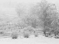 Winterland (wjaachau) Tags: snow snowing snowstorm blizzard weather sky storm winter morning landscape nature backyard life trees countryside