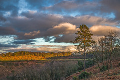 End of day (fotosforfun2) Tags: nationaltrust landscape trees wood nature scene hindhead surrey devil punch bowl devilspunchbowl england britain uk green brown