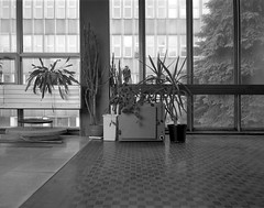 Wrocław, Poland. (wojszyca) Tags: wanderlust travelwide travelwide90 4x5 largeformat ilford hp5 hc110 163 epson v800 interior pklant windows architecture vintage socialist modernism wrocław university