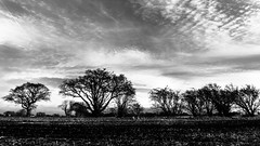 Boundaries (PJT.) Tags: sefton lancashire merseyside arable agricultural farmland tress sky clouds silhouettte moon jet contrail stream stuble incorporated farm house bw sony