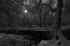 Moonlight Forest (gubanov77) Tags: winter january snow snowy moonlight forest trees twilight branches night longexposure kuzminki lublino churilihariver river landscape nature moscow russia woods