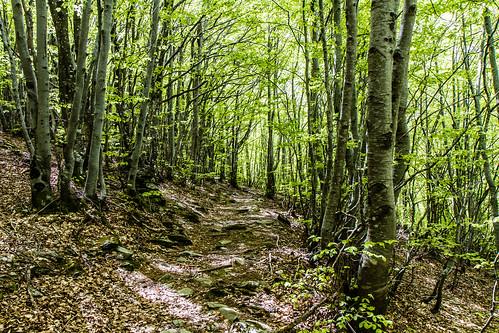 Forêt Cévénolle enchantée