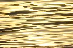 Liquid gold (alanpitman703) Tags: lochfyne achnaba scotland argyll colour gold