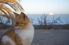 Beach's cat (Abdullah Taher) Tags: white winter water egypt tree green egyptian sea yellow travel trip sky day image photo photograph palm africa shot nikon life landscape light cat animal look bright blue beach boat bay nature ngc