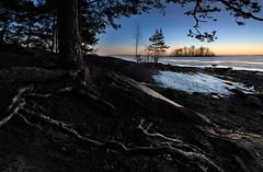 Roots on the beach (Kimmo Järvinen) Tags: beach rocks lake island tree winter ice snow landscape finland joensuu sunset maisema nature nikon tokina tokina1116mm d500 water luonto sky cokin filter tokina1116mmf28 atx116prodx