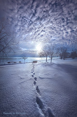There is Nothing Insignificant (Phil~Koch) Tags: sunlight horizon pastel sun frost journey soft artwork sunrise travel snow footprints shadows bench blue lakemichigan beach shore