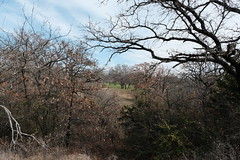 Winter in North Texas 2020 (Gene Ellison) Tags: trees winter landscape northtexas brown green nature grass leaves clouds photography bluesky fujifilm naturephotography undergrowth sooc classicchrome