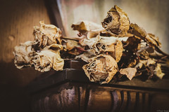 Lost youth (Peter Szasz) Tags: calm canon canon80d 80d 50mm 50 colorless grey faded old aged wither flowers rose roses brown black dark sad emotion empty bouquet youth clear vintage flora image indoors imaginary imagine time lost melancholic still stilllife shelf wooden shadows fifty nifty dry tranquil texture crop petals thorns dead death idea interesting