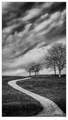 my Way (ASTPic) Tags: art bw noiretblanc way pfad stype skurve weg 169