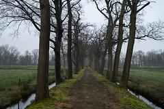 Vennebroek (Jeroen Hillenga) Tags: drenthe landschap landgoed vennebroek netherlands nederland laan natuurmonumenten eikenlaan eiken