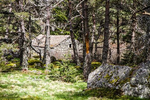 Maison de berger en fôret de Mercroire