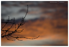 Evening seductions (GP Camera) Tags: nikond7100 nikonafsdx55300mmf4556gedvr evening sera dusk crepuscolo winter inverno sunset tree tramonto orange arancio albero branches rami curves curve sky cielo clouds nuvole shades sfumature focus messaafuoco bokeh sfocato softbackground sfondosoffice lightandshadows lucieombre silence silenzio quiet quiete vignetting depthoffield profonditàdicampo whiteframe cornicebianca italy italia piemonte monferrato darktable gimp opensource freesoftware softwarelibero digitalprocessing elaborazionedigitale