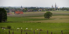 Countryside pastorale, near Ieper/Ypres, West Flanders, Belgium (edk7) Tags: nikond300 nikonnikkor18135mm13556gedifafsdx edk7 2011 belgium flanders westflanders westvlaanderen westvloandern flandreoccidentale westflandern ieperskyline ypresskyline sintmaartenskerk sintmaartenskathedraal stmartinschurch stmartinscathedral medieval romanesque architecture building oldstructure church farm cattle animal vineyard tree sky haze rural country countryside field crops post bovine fence