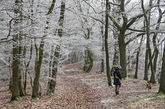 the sugar-coated forest (beeldmark) Tags: sauerland duitsland deutschland germany waldeck hessen natuur hond bos rijp forest beeldmark pentax k5
